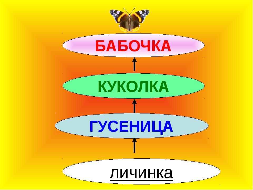 личинка ГУСЕНИЦА КУКОЛКА БАБОЧКА