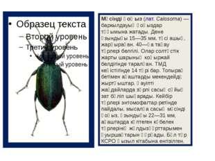 Мүсінді қоңыз(лат.Calosoma) — баркылдауық қоңыздар тұқымына жатады. Дене ұз