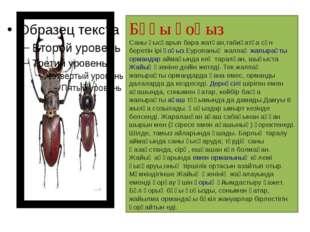 Бұғы қоңыз Саны қысқарып бара жатқан,табиғатқа сән беретін іріқоңыз.Еуропаны