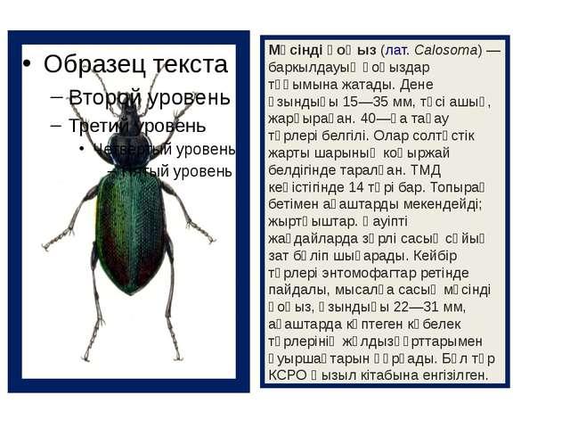 Мүсінді қоңыз(лат.Calosoma) — баркылдауық қоңыздар тұқымына жатады. Дене ұз...