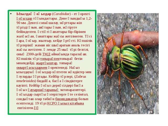 Ызылдақ қоңыздар(Carabidae) - ет қоректіқоңыздартұқымдастары. Дене ұзындығ...