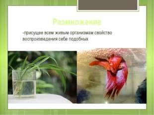 Размножение -присущее всем живым организмам свойство воспроизведения себе под