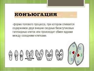 -форма полового процесса, при котором сливается содержимое двух внешне сходны