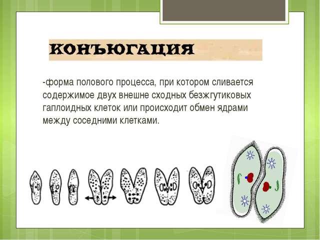 -форма полового процесса, при котором сливается содержимое двух внешне сходны...
