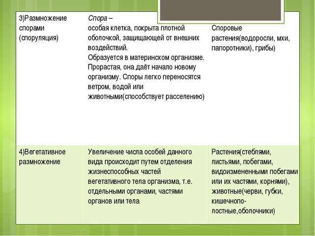 3)Размножениеспорами (споруляция) Спора– особая клетка, покрыта плотной оболо...