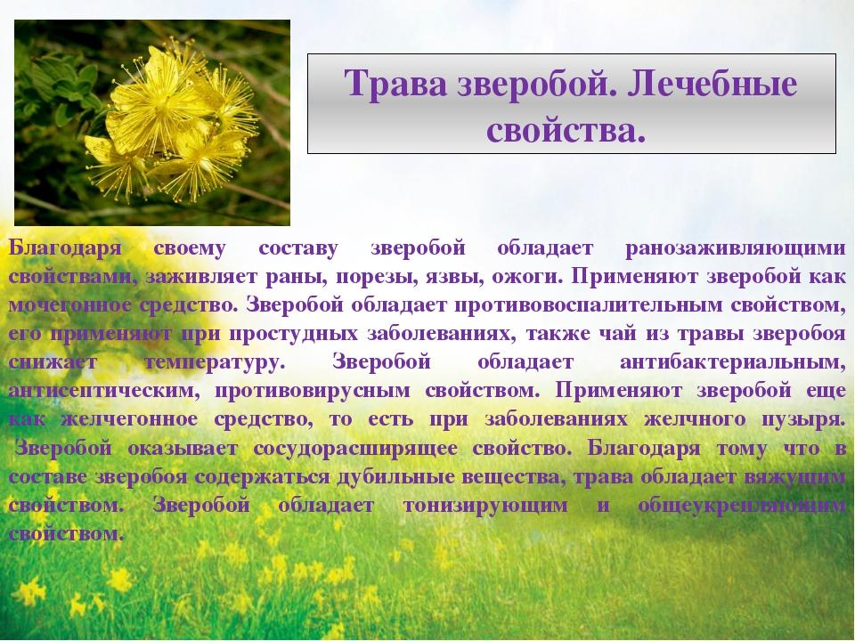какие лекарственные растения обладают антимикотическими свойствами