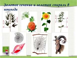 * http://aida.ucoz.ru * Золотое сечение и золотая спираль в природе http://ai