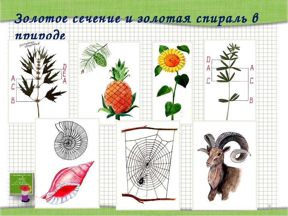 * http://aida.ucoz.ru * Золотое сечение и золотая спираль в природе http://ai...