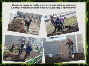 В апреле провели подготовительную работу, вскопали клумбы, посеяли семена, п