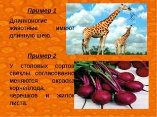 Пример 1 Длинноногие животные имеют длинную шею. Пример 2 У столовых сортов с