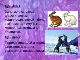 Пример 1 Заяц меняет окрас шерсти, летом – коричневая, зимой - белая, это пом