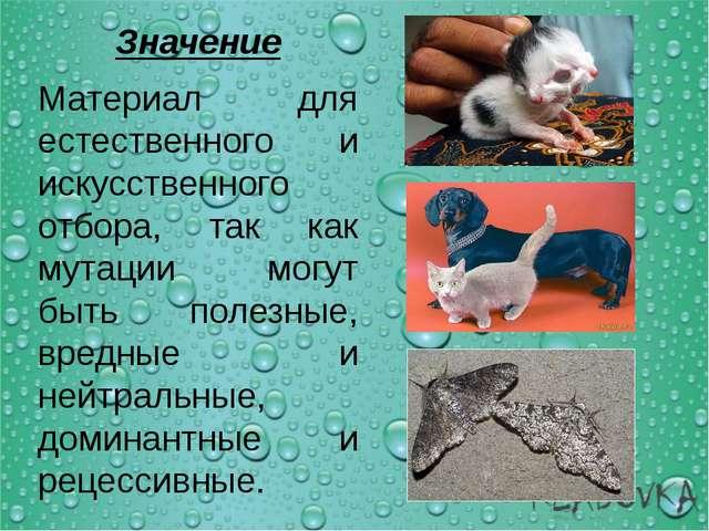 Значение Материал для естественного и искусственного отбора, так как мутации...