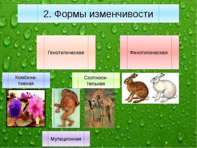 Генотипическая Фенотипическая Комбина-тивная Мутационная Соотноси-тельная 2....