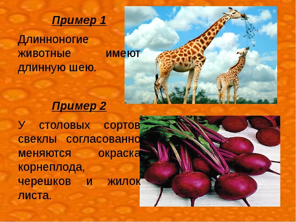 Пример 1 Длинноногие животные имеют длинную шею. Пример 2 У столовых сортов с...