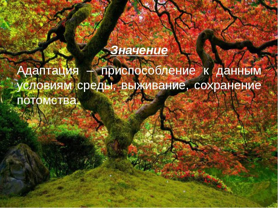 Значение Адаптация – приспособление к данным условиям среды, выживание, сохра...