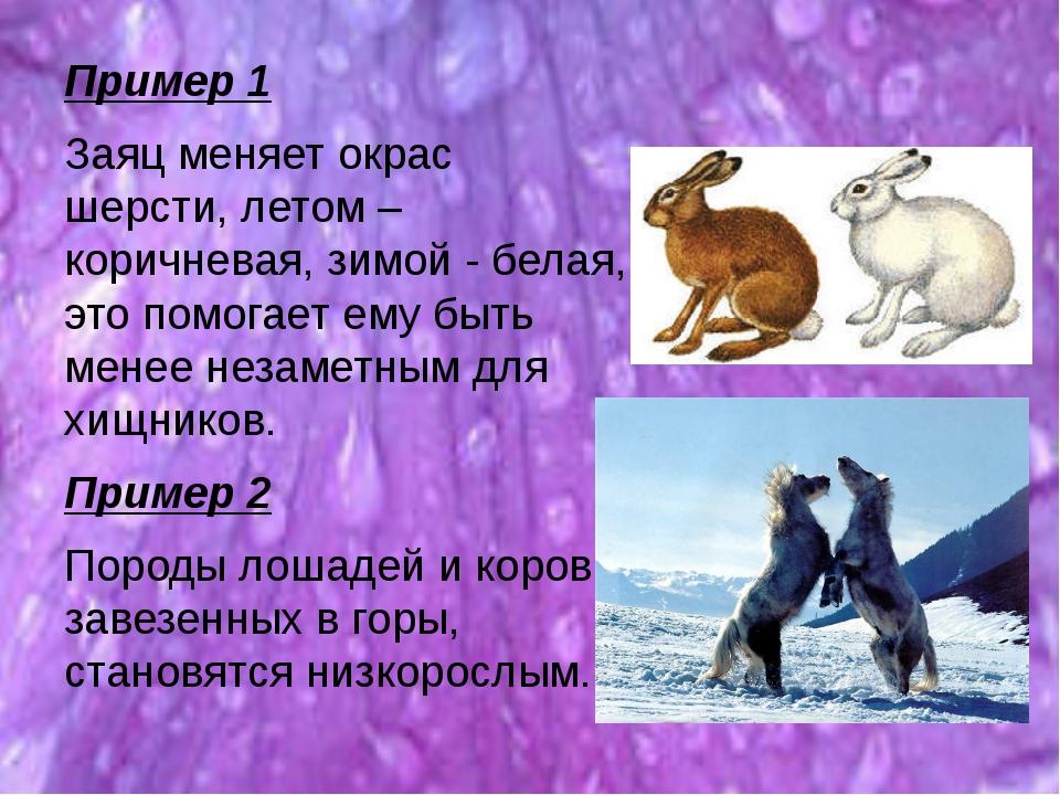 Пример 1 Заяц меняет окрас шерсти, летом – коричневая, зимой - белая, это пом...