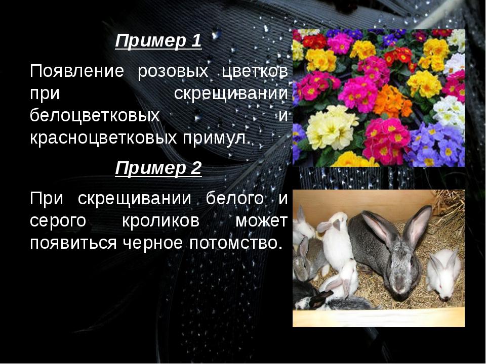 Пример 1 Появление розовых цветков при скрещивании белоцветковых и красноцвет...