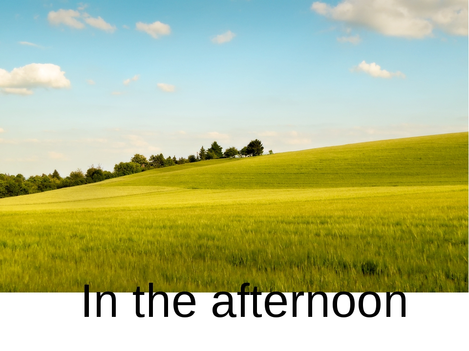 In the afternoon