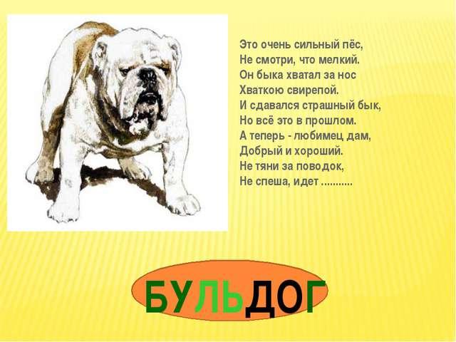 БУЛЬДОГ Это очень сильный пёс, Не смотри, что мелкий. Он быка хватал за нос Х...