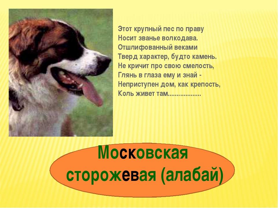 Московская сторожевая (алабай) Этот крупный пес по праву Носит званье волкода...