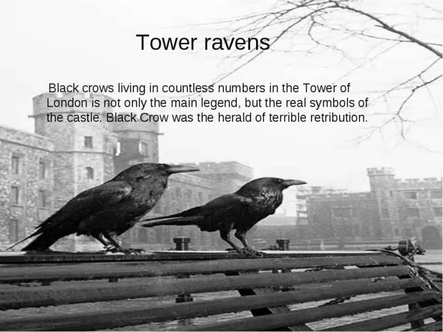 Tower ravens Black crows living in countless numbers in the Tower of London i...