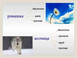 ромашка волчица движение цвет чувства движение звучание труд чувства