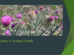 The symbol of Scotland is thistle
