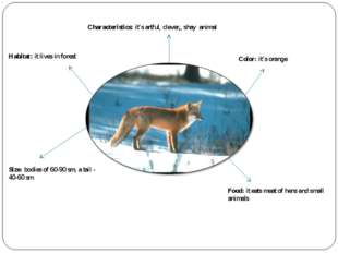 Characteristics: it's artful, clever,, shay animal Habitat: it lives in fores