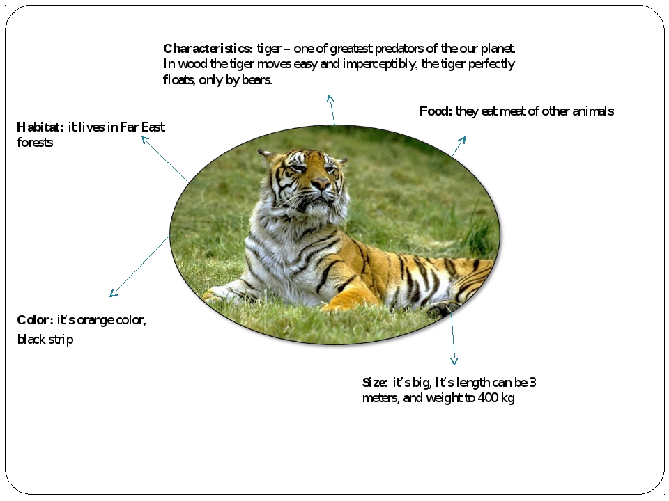 Characteristics: tiger – one of greatest predators of the our planet. In wood...