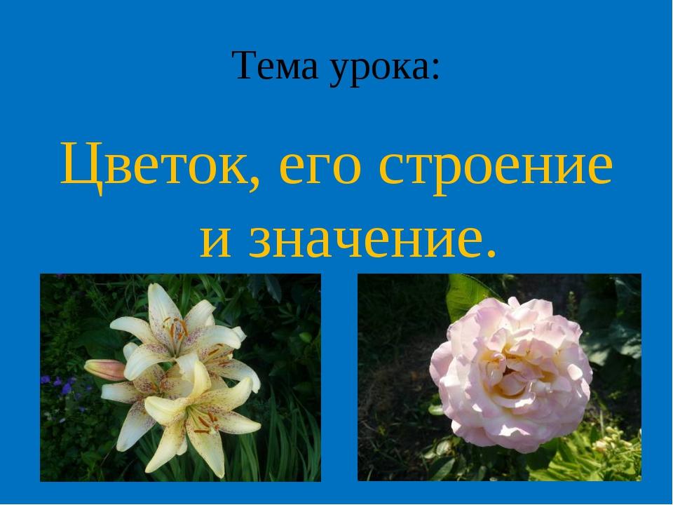 Тема урока: Цветок, его строение и значение.
