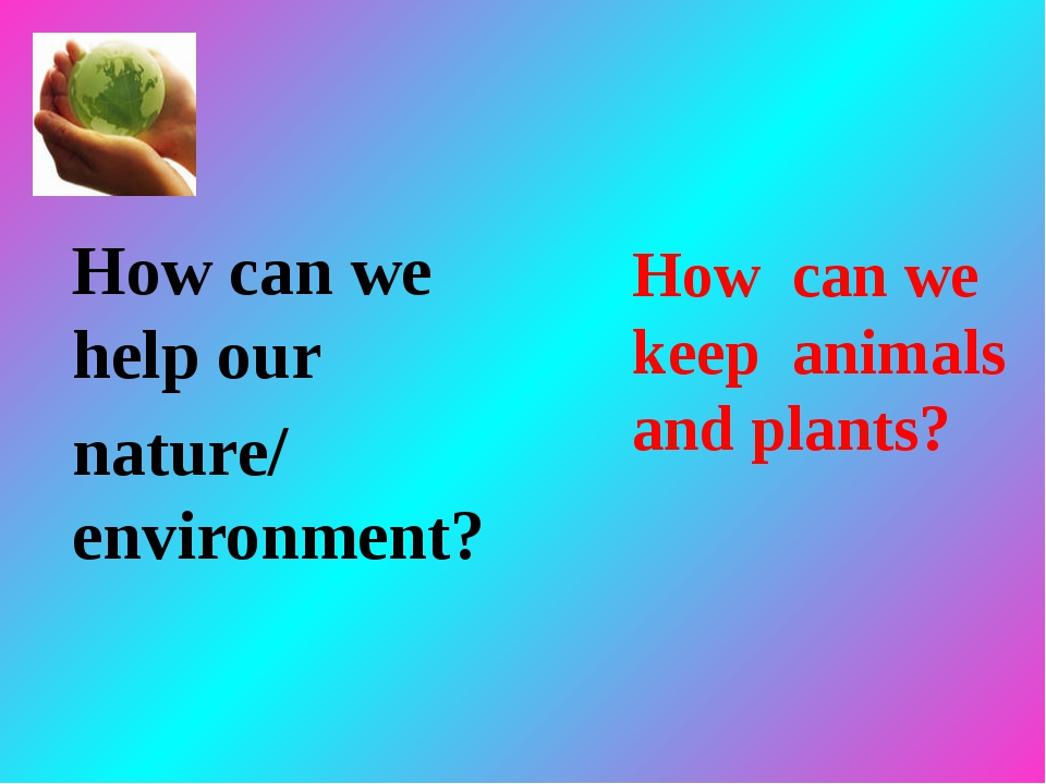 Ways to help the environment essay