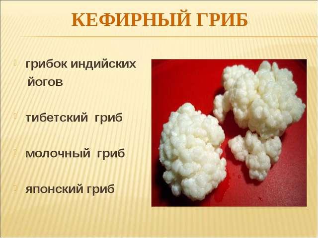 КЕФИРНЫЙ ГРИБ грибок индийских йогов тибетский гриб молочный гриб японский гриб