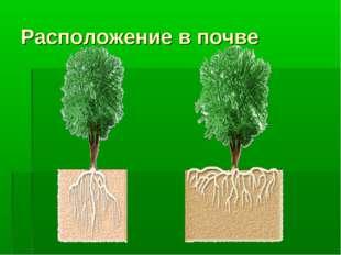 Расположение в почве