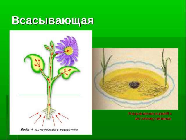 Всасывающая Направление корней к источнику питания