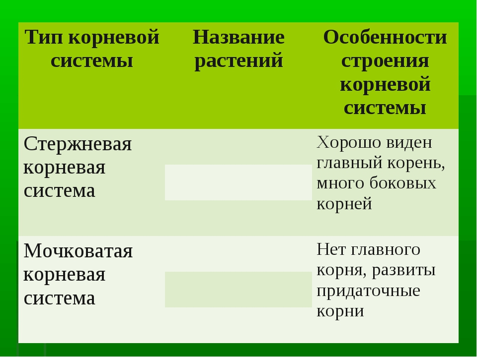 Тип корневой системыНазвание растенийОсобенности строения корневой системы...
