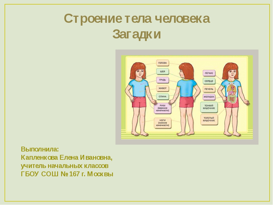 Строение тела человека Загадки Выполнила: Капленкова Елена Ивановна, учитель...
