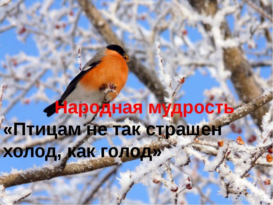 Покормите птиц зимой картинки, добрым