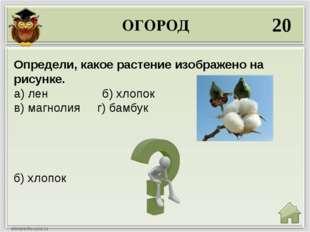 ОГОРОД 20 б) хлопок Определи, какое растение изображено на рисунке. а) лен б)