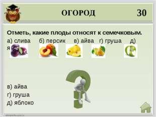 ОГОРОД 30 в) айва г) груша д) яблоко Отметь, какие плоды относят к семечковым