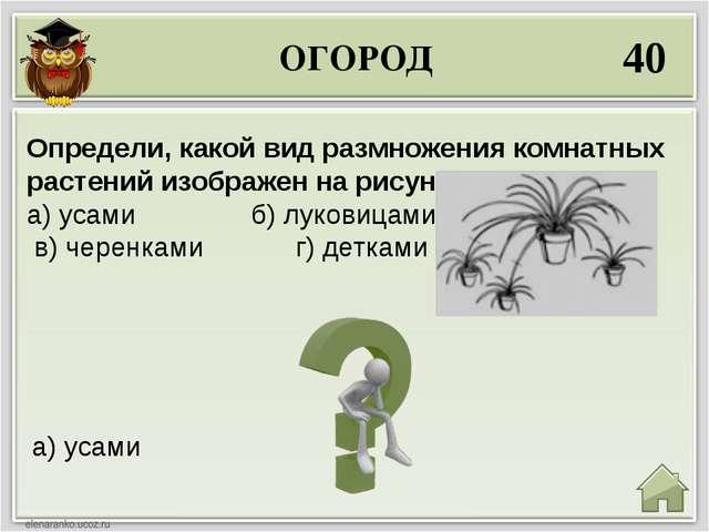 ОГОРОД 40 а) усами Определи, какой вид размножения комнатных растений изображ...