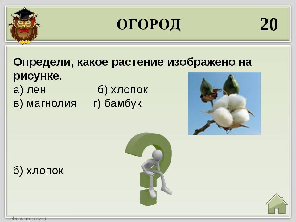 ОГОРОД 20 б) хлопок Определи, какое растение изображено на рисунке. а) лен б)...