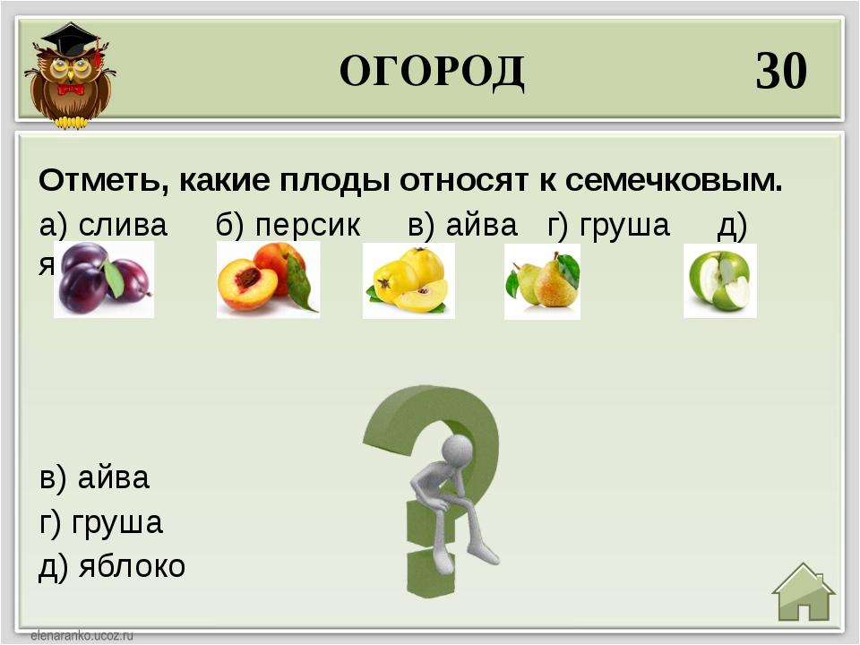 ОГОРОД 30 в) айва г) груша д) яблоко Отметь, какие плоды относят к семечковым...