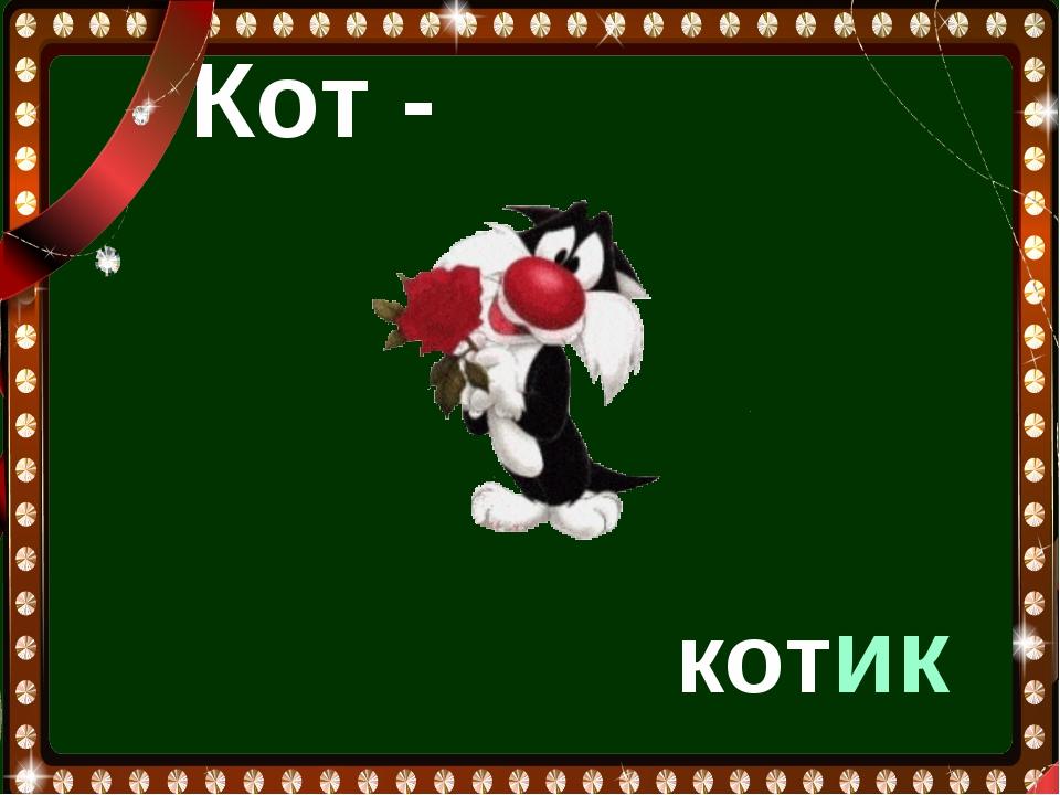 Кот - котик
