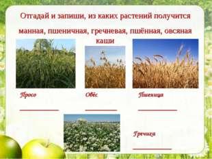 Просо ___________ Пшеница ___________ Овёс _________ Отгадай и запиши, из как