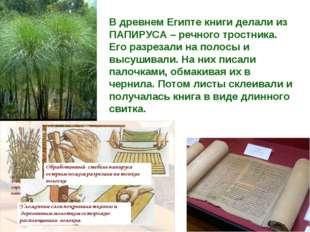 В древнем Египте книги делали из ПАПИРУСА – речного тростника. Его разрезали