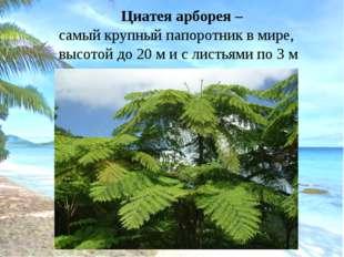 Циатея арборея – самый крупный папоротник в мире, высотой до 20 м и с листья