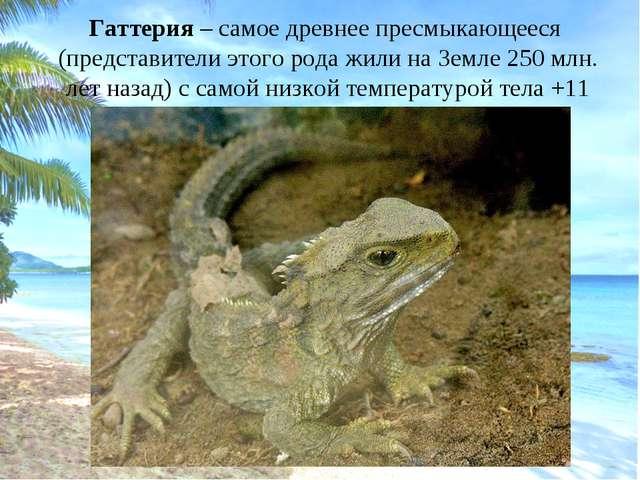 Гаттерия – самое древнее пресмыкающееся (представители этого рода жили на Зем...