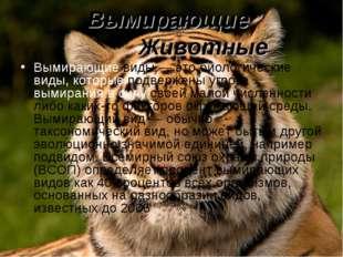 Вымирающие Животные Вымирающие виды — это биологические виды, которые подверж