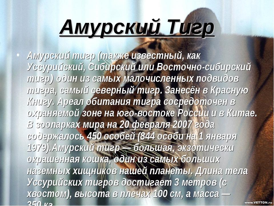 Амурский Тигр Амурский тигр (также известный, как Уссурийский, Сибирский или...