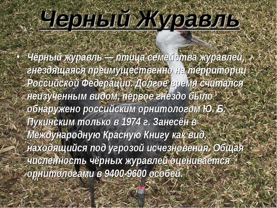 Черный Журавль Чёрный журавль — птица семейства журавлей, гнездящаяся преимущ...
